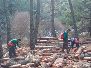 Alumnos Aprovechamientos Forestales EFA EL SOTO